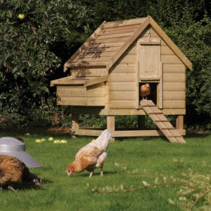 Large-Chicken-coop